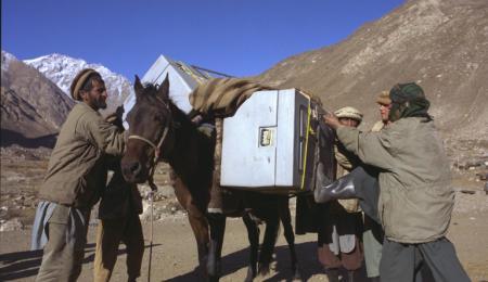 Kylboxar med vaccin transporteras på åsnor.